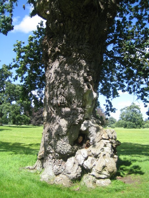 Tree at Blenheim Palace